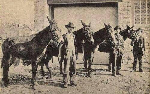 Men and Mules | Date Unknown